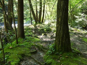 Forest path along the creek bordered by moss