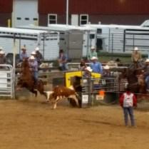 Team steer roping
