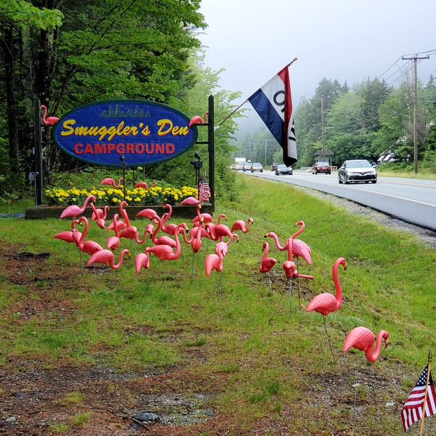 It was Flamingo Weekend in Southwest Harbor!