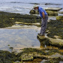 Exploring the tide pools