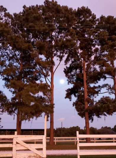 Moon over the gate