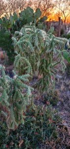 So many varieties of cacti