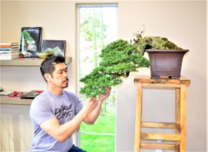 Intro to Bonsai (1)