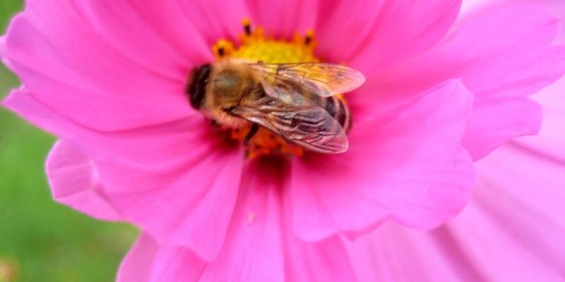 Bee My Valentine: A Native Pollinator Celebration