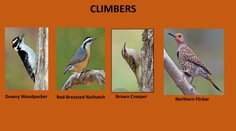 AudubonBirds-12