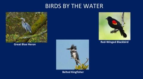AudubonBirds-2