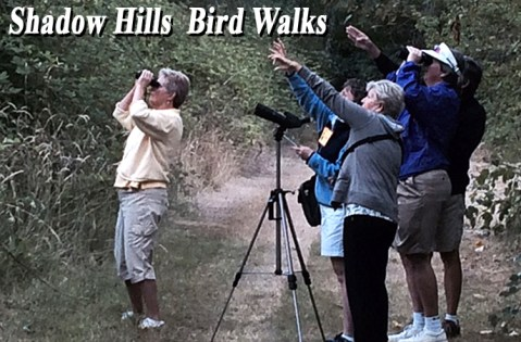 BirdWalks