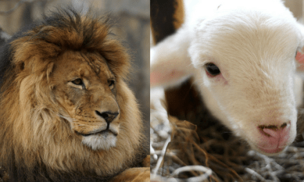 Lamb Of God & Lion Of Judah