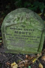 A sad ending for a much missed dog - Monty copyright Carole tyrrell