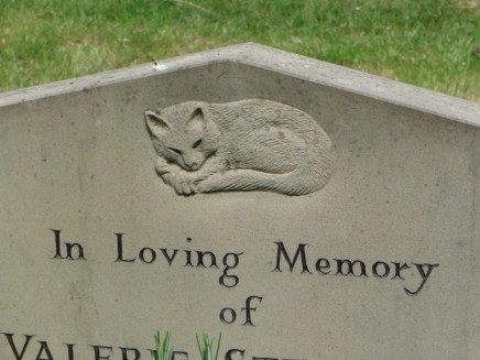 A sleeping cat in Brompton Cemetery. ©Carole Tyrrell