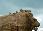 Lions @ WM Safari Park