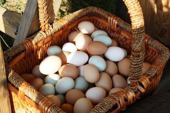 Steam-Boiled Eggs Shady Grove Ranch | Grass-fed beef