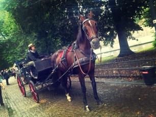 horse carriage bruges