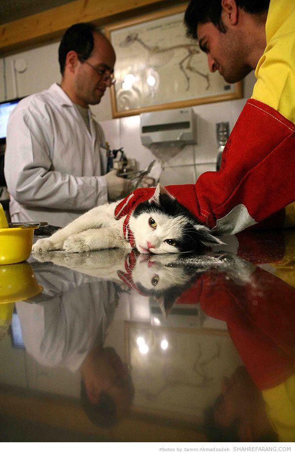 https://i1.wp.com/shahrefarang.s3.amazonaws.com/wp-content/uploads/2014/03/Animal-Hospital-Tehran-0104.jpg