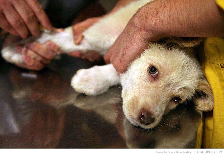 https://i1.wp.com/shahrefarang.s3.amazonaws.com/wp-content/uploads/2014/03/Animal-Hospital-Tehran-9757.jpg