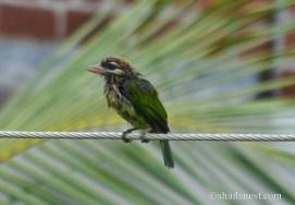 bird-376
