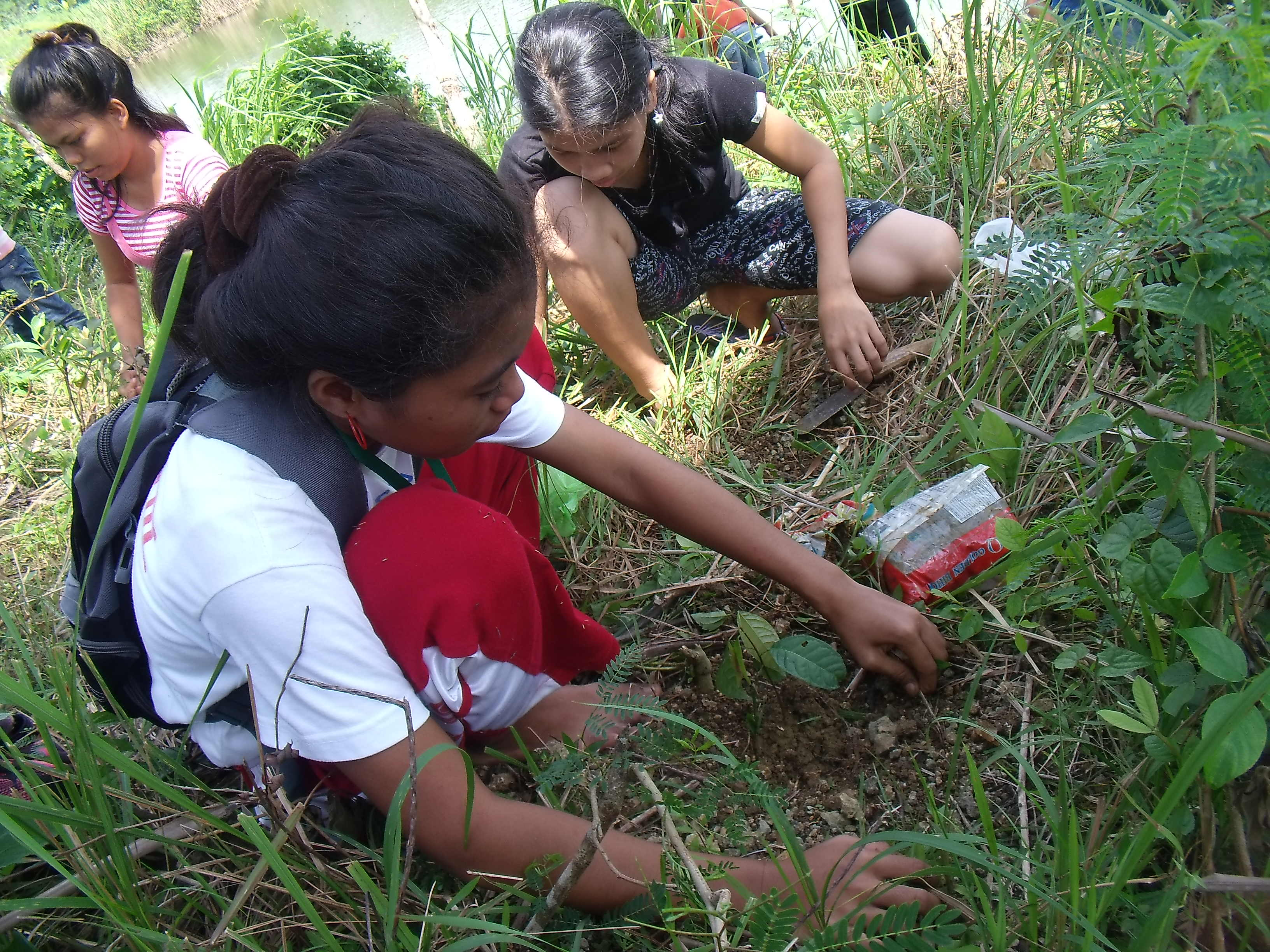 Tree Planting My Student Was Bitten By A Snake