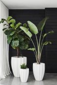 Large Plant for Indoor Garden Concept for Easy Maintenance
