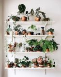 Life Plant Decorations for Indoor in Vertical Hanging Pots Part 47