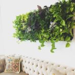Life Plant Decorations for Indoor in Vertical Hanging Pots Part 62