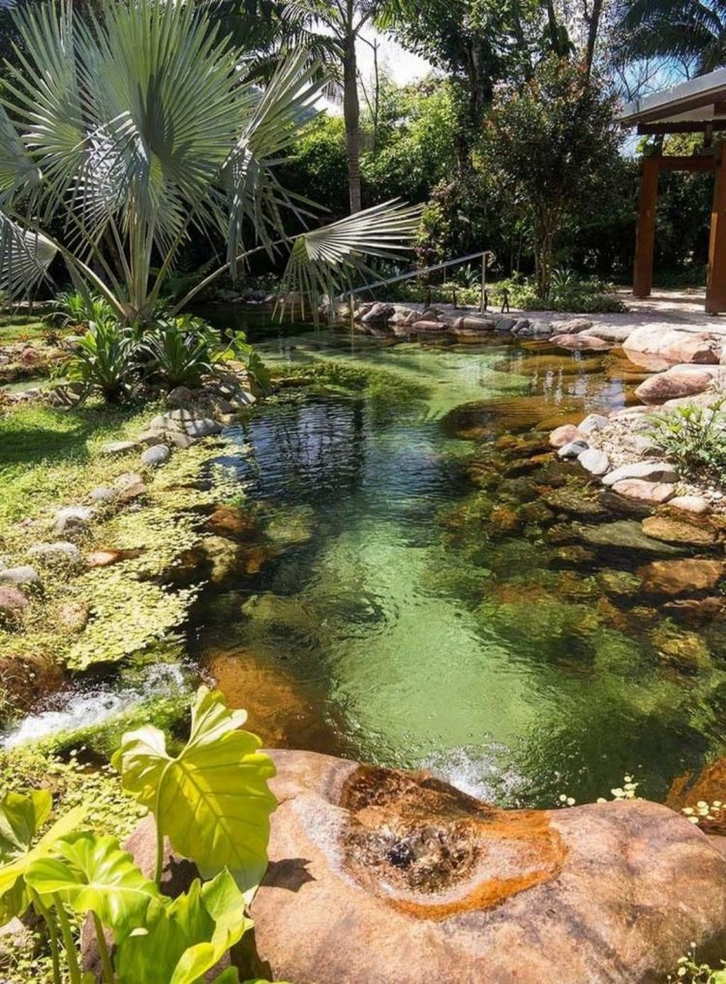 Natural swimming pools designs using plants or a combination of plants and sand filters Part 22