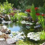 Best water garden style rich of natural accents with stones and aquatic plants compositions Image 16
