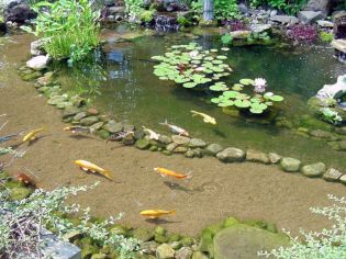 Best water garden style rich of natural accents with stones and aquatic plants compositions Image 2