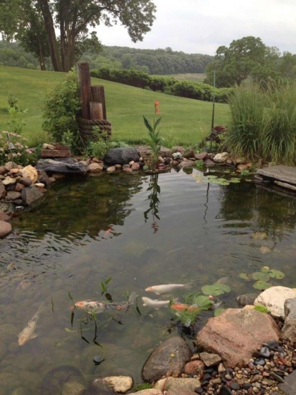Clever exterior update showing different fresh fish pond designs Image 13