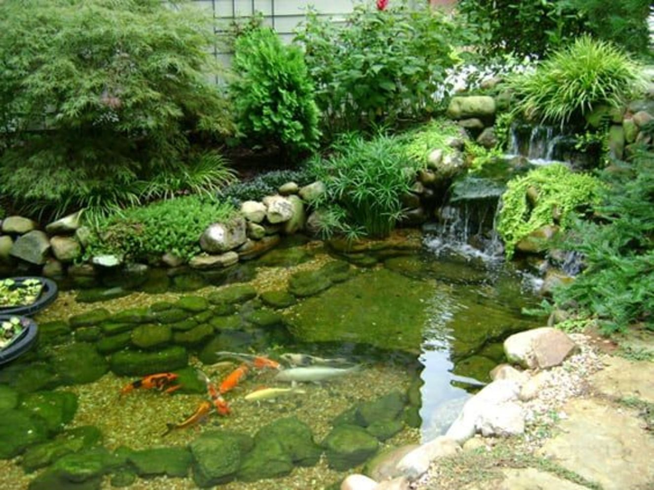 Clever exterior update showing different fresh fish pond designs Image 14
