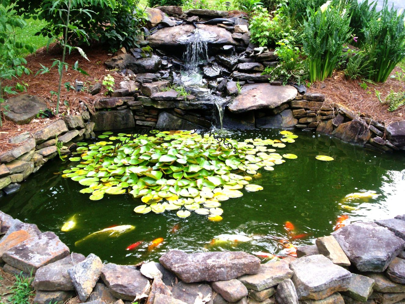 32 Small Fish Pond Designs Look Perfect for Improving Tiny ... on Backyard Koi Pond Designs  id=60496