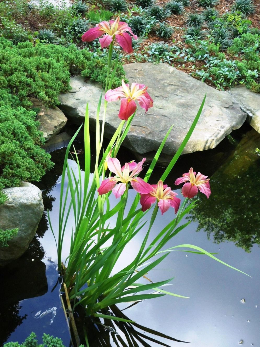 Water garden ideas for more natural backyard feeling with beautiful aquatic plants and ponds Image 29