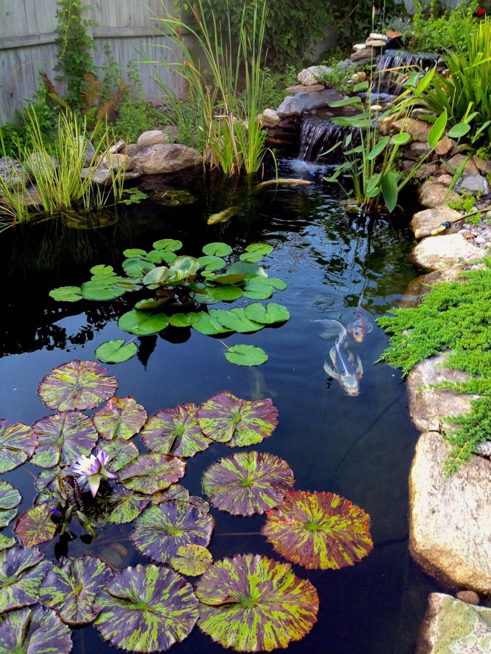 Water garden ideas for more natural backyard feeling with beautiful aquatic plants and ponds Image 30