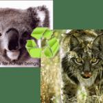 Actualizar Ubuntu Karmic Koala 9.10 a Ubuntu Lucid Lynx 10.04
