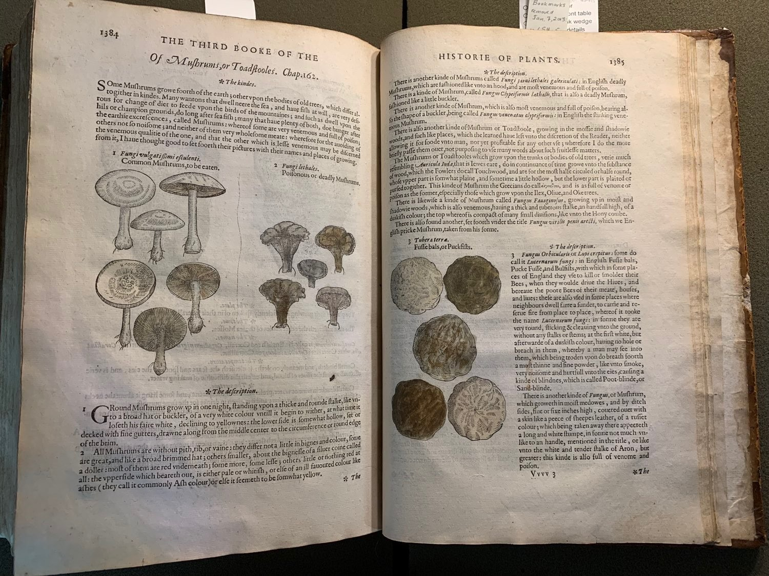 Illustrations of edible and poisonous mushrooms from a 1597 herbal
