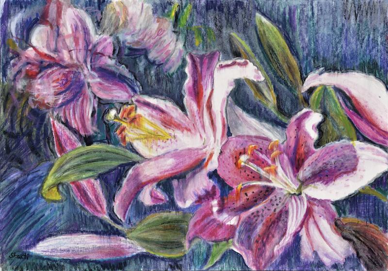 stargazers: rubrum lilies, shakti sarkin