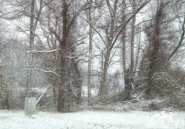 Winter wonderland has lost it's glamor on Shalavee.com