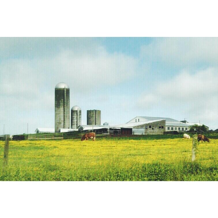 dairy farm from Shalavee.com
