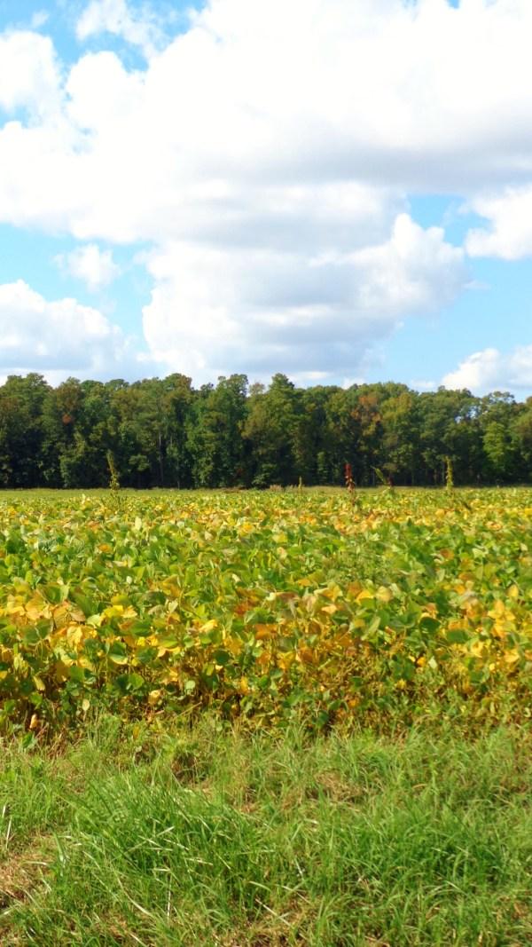 Eastern Shore farmland on Shlavee.com