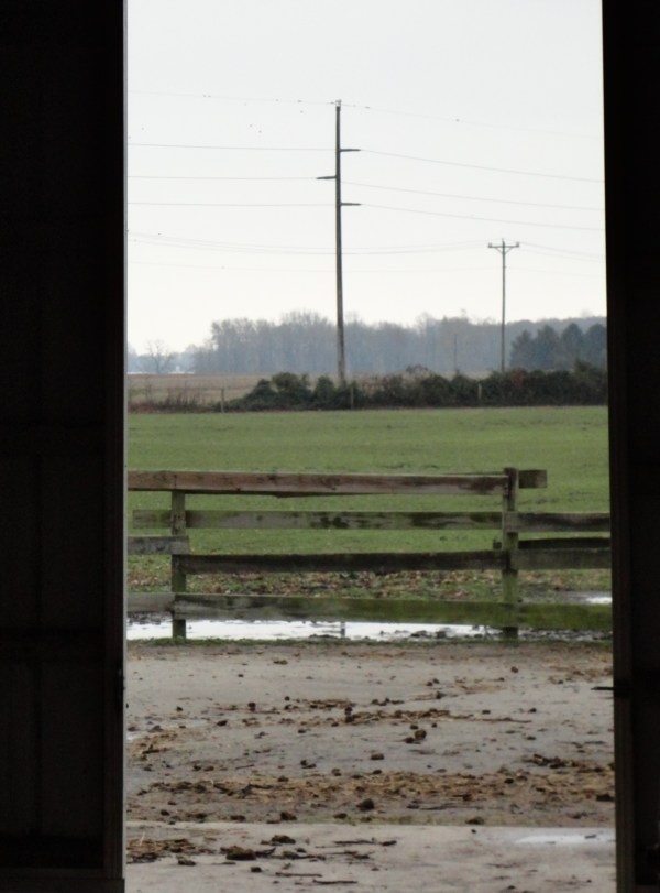 Out the barn door on layers on shalavee.com