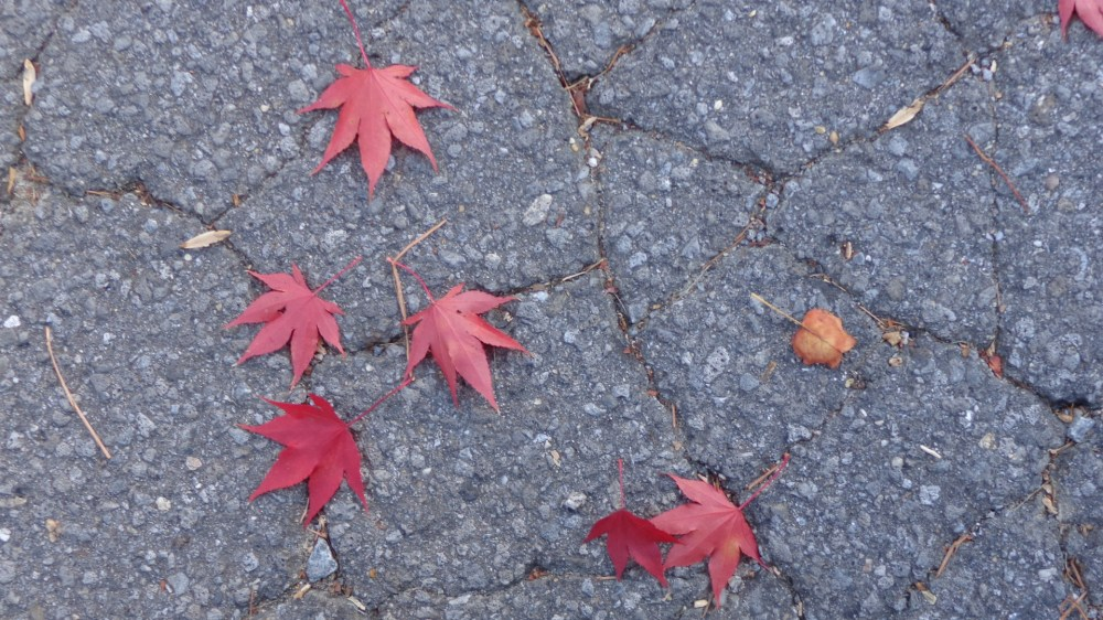 fallen leaves on Shalavee.com