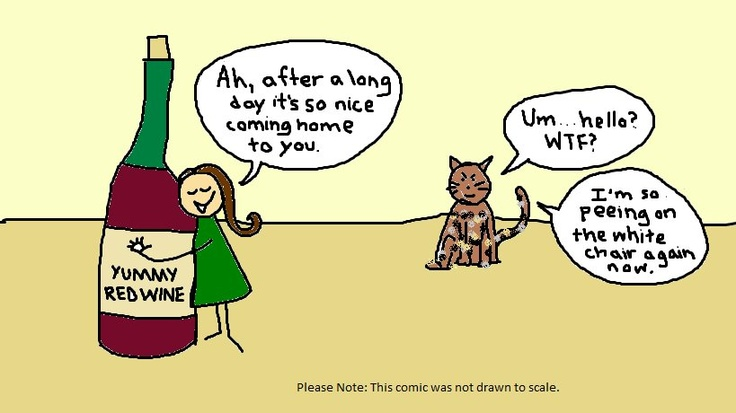 wine and cat on Shalavee.com