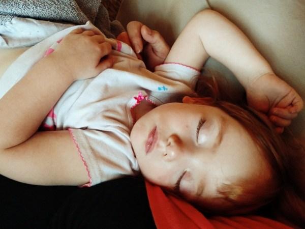 Fiona's lap nap on Shalavee.com