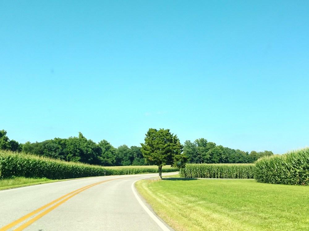 road and cornfields on Shalavee.com