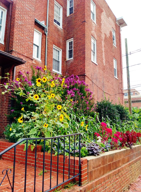 Urban gardening is sublime in Annapolis on Shalavee.com