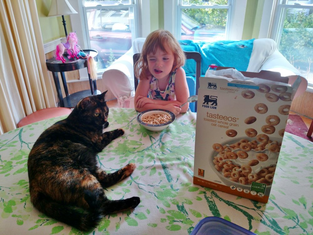 Fiona, her chi, her cheerios, and her cat Chessie on Shalavee.com