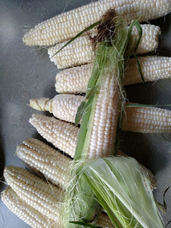 eastern-shore-corn-porn Food Porn on Shalavee.com