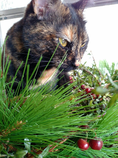 chessie-in-the-pine on the Hurry and the Hush on Shalavee.com