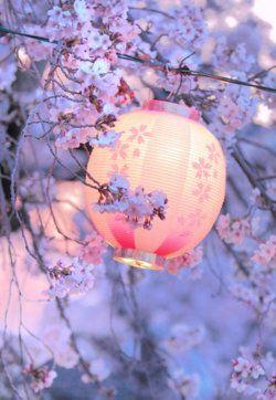 cherry-blossoms-lantern