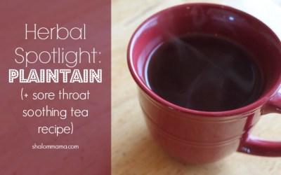 Herbal Spotlight: Plaintain (and Sore Throat Soothing Tea Recipe)