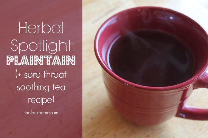 Herbal spotlight Plaintain (+ sore throat soothing tea recipe)